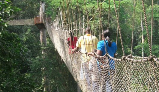 The canopy walkway at the Kakum National Park (pictured here) is one of the leading tourist destinations in Ghana