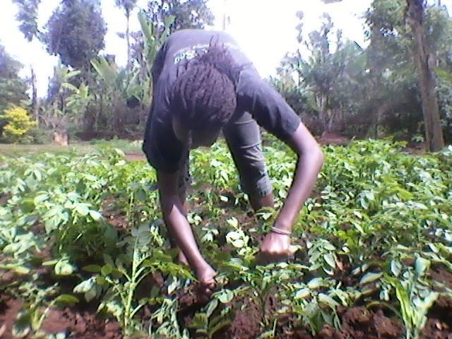 Wpid Agriculture
