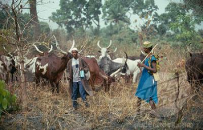 Wpid Fulani Herdsmen