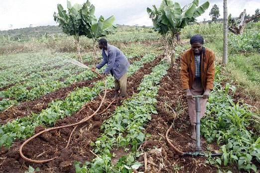 Wpid Small Scale Farmers