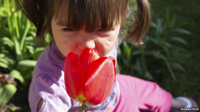A flower smells sweet because of the combined effect of hundreds of odours