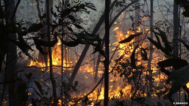 An increase in the frequency of fires and drought-like conditions could result in an ecological tipping point