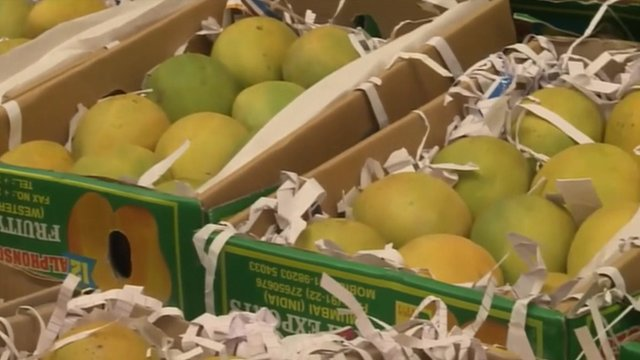 ?The EU's ban on Indian mangoes is causing concern for both importers and exporters