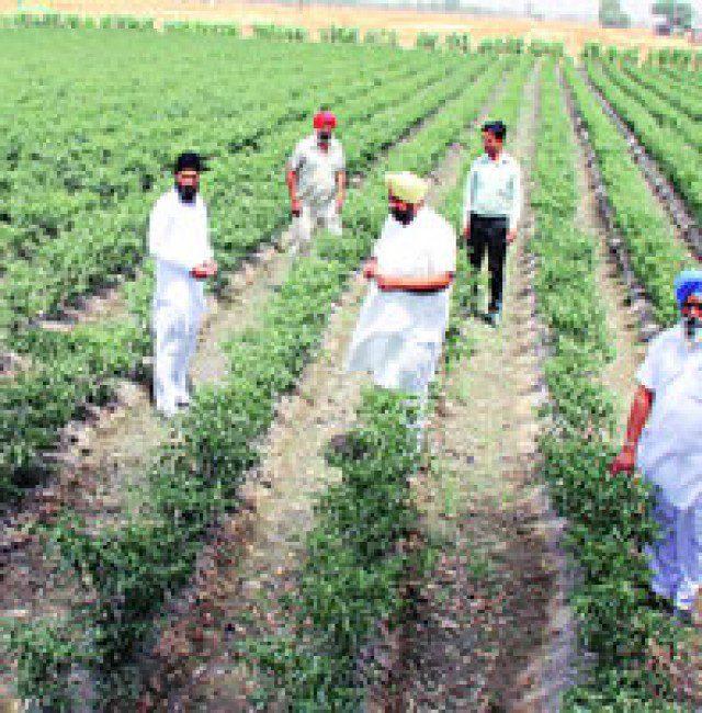 PUNJABI farmers