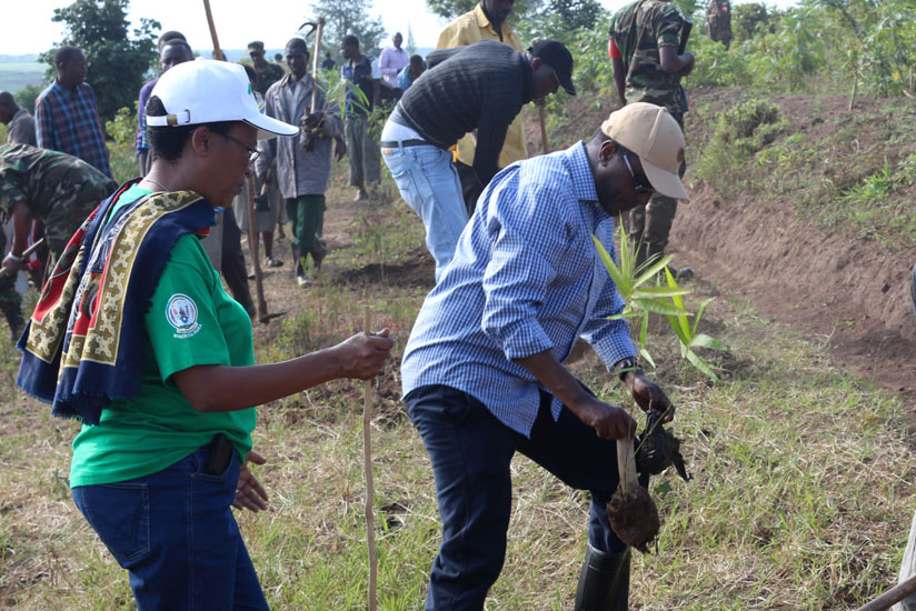 Natural Resources Minister Vincent Biruta (R) accompanied by REMA chief Rose Mukankomeje plant trees in Ngeruka Sector yesterday. (Courtesy)