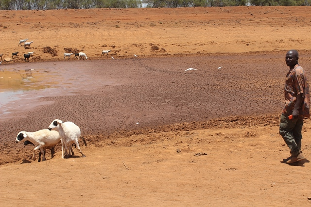 A local resident is seen with his cattle in Baringo, northwest Kenya, March 12, 2015. Residents of Baringo County are experiencing extreme cases of hunger as a result of the long periods of drought in Kenya. According to Kenya's Devolution Cabinet Secretary Anne Waiguru, a total of 1.6 million people in arid and semi-arid parts of Kenya are in danger of dying as a result of hunger. (Xinhua/Simbi Kusimba)