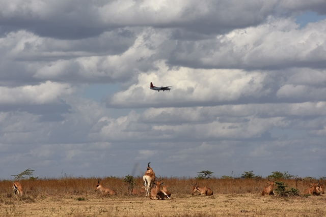 A plane flies over a herd of antelopes at Kenya's Nairobi National Park in Nairobi, Kenya, March 21, 2015. Kenya's