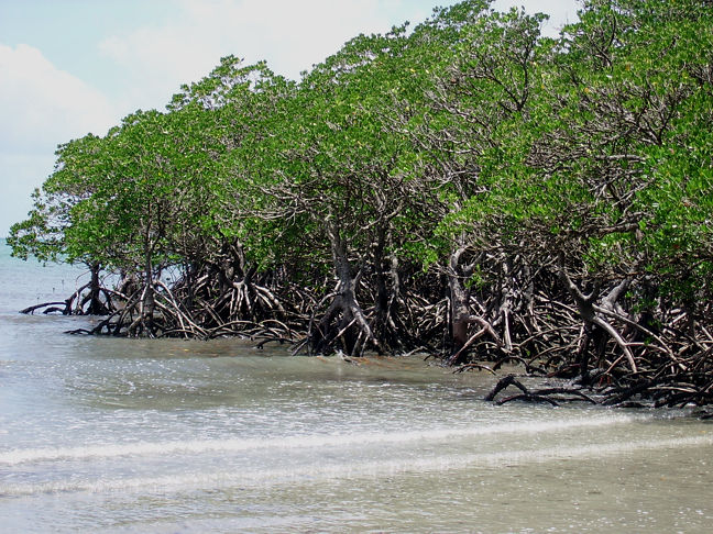 mangroves in the philippines pdf
