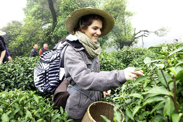 A student from Switzerland picks up fresh tea leaves as they visit a tea garden in Hangzhou, capital of east China's Zhejiang Province, April 5, 2015. A group of Swiss senior high school students visited a tea garden in Hangzhou with their Chinese peers to learn about the Longjing Tea culture. (Xinhua/Li Zhong) (wyo)