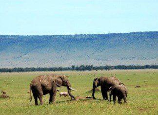 Wildlife migration