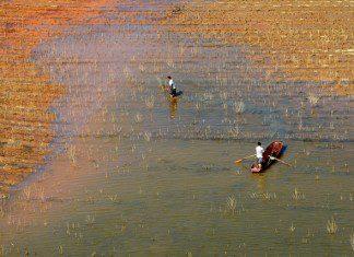 Fishers work in the Chengbi Lake for fishing in Baise, south China's Guangxi Zhuang Autonomous Region, Nov. 7, 2015. (Xinhua/Wei Wanzhong)