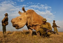 Image by http://www.brentstirton.com/
