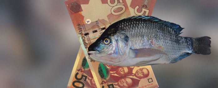 Safeway Tilapia Investment