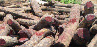 rosewood logging