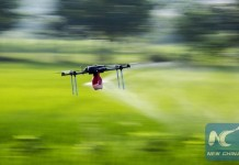A drone sprays pesticide in a field in Duchang County of Jiujiang City, east China's Jiangxi Province, July 2, 2015. (Xinhua/Fu Jianbin)