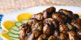 Wxin/Dreamstime.Com Cicada aficionados boil or fry them up like shrimp.