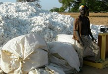 GMO Bt Cotton