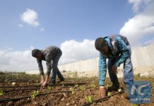 Palestinians work on their farm near a part of the controversial Israeli barrier near the West Bank city of Qalqilya March 30, 2016. (Xinhua/Reuters Photo)