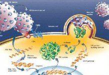HIV-1 DNA