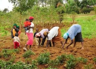 Alliance for Green Revolution in Africa (AGRA)