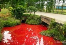 A small river in Guanghan City, Sichuan Province in southwest China was polluted by blood-red materials on the afternoon of April 23, 2016.[Photo/weibo]