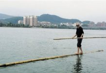 Fang Shuyun crosses the Fuchun River on a bamboo stick. [Zhejiang Online]