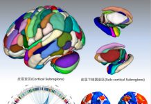 The Brainnetome atlas was developed by the Brainnetome Center at the Chinese Academy of Sciences. [Photo from cas.cn]