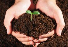 China will conduct regular investigations into soil quality every 10 years, and establish a database for soil by 2018. [File photo]