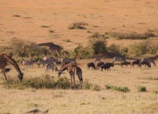 Views from the Basecamp Masai Mara