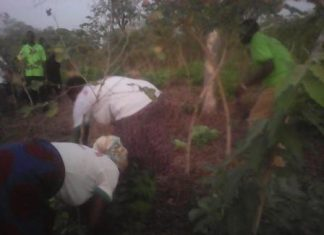 One of the Farmer Managed Natural Regeneration project site at Adaboya