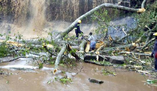 Ghana tree fall at waterfalls during storm kills 17