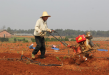 A farmer is working on a family farm in Yongfeng county, eastern China's Jiangxi province, on March 9, 2017. The farm has built a comprehensive sales platform that can connect its business customer and the impoverished households for a targeted poverty reduction. (Photo by People's Daily)
