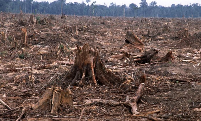 deforestation-