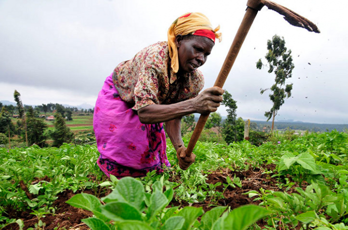 Planting for food and jobs