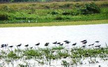 Sakumo Ramsar