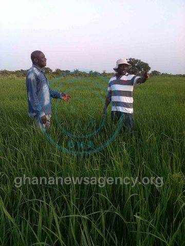 Mr Boakye Acheampong, Regional Director of Agriculture (left) and Mr Abanga, Director of Abanga Farms