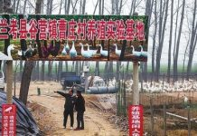 Breeding base run by villager Gao Xueliang in Lankao County in central China's Henan Province. The base was established with the help of a cadre sent to help the villagers. Lankao was singled out as the first county in the province to get rid of poverty on March 27, 2017. It had 79,400 impoverished residents at the end of 2013. (Photo from Henan Daily)