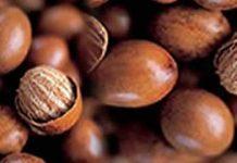 Shea-nuts