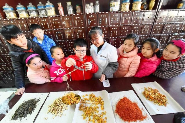 An elementary school student weighs Chinese herbs under the guidance of pharmacist, March 15, 2017. (Photo from People's Daily Online)