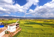 A sea of rape flowers in blossom in Yingpan Village, Dali, southwest China's Yunnan province during the 2018 Spring Festival. China's rural tourism is focusing more on developing ecological tourism based on the lucid waters and lush mountains. (Photo from CFP)