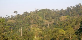 Atewa Forest