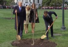 White House tree planted disappears