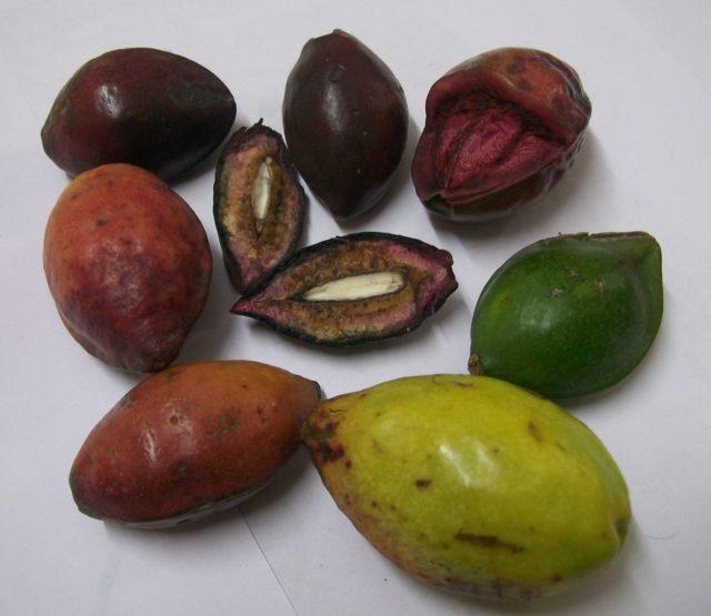 ''Abrofo Nkate3'' - Tropical Almond