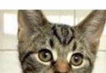 cat named Nancy