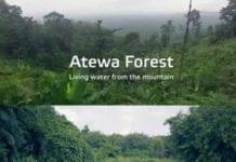 Atiwa Forest