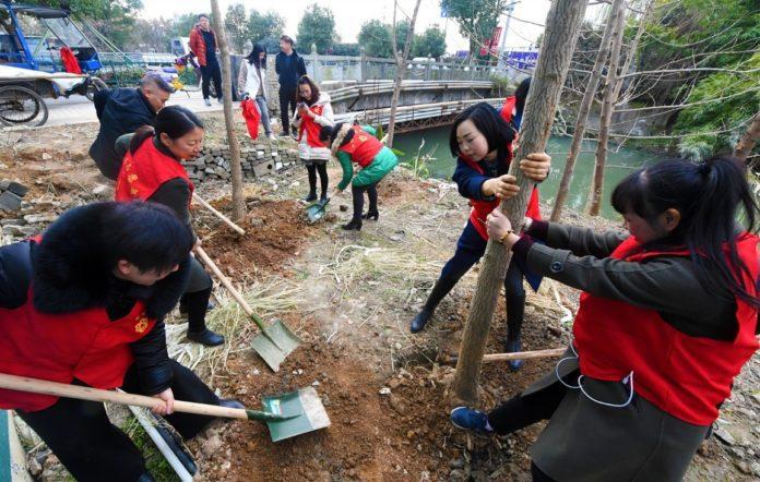 Volunteers Are Planting Trees