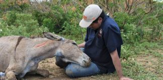 Brazil Euthanesia Credit The Donkey Sanctuary