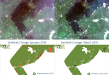 60% Deforestation In Ghana Explained With Satellites