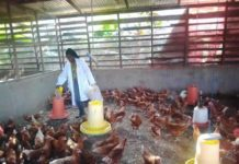 Poultry Project