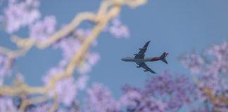 Photo taken on Nov. 4, 2019 shows a Qantas airplane flying above jacaranda trees at Kirribilli in Sydney, Australia. (Xinhua/Bai Xuefei)